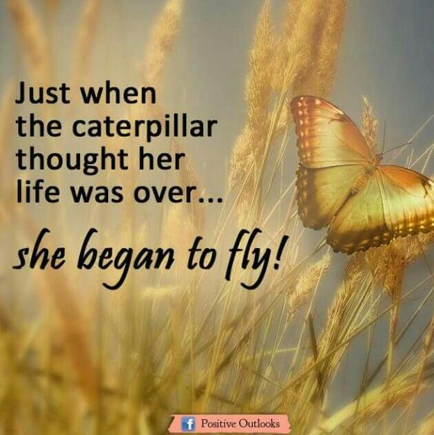 Caterpillar To A Butterfly Inspiration Quotes Humor Jokes Memes